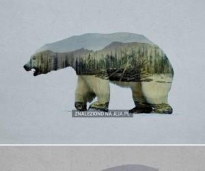 Zwierzęta w ich naturalnym środowisku