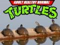 Zwykłe żółwie, nie ninja