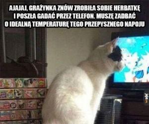 Kot o wszystkim pomyśli