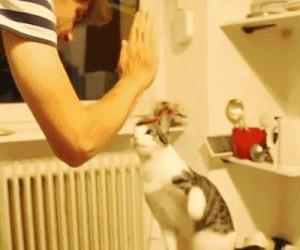 Gra w łapki z kotem