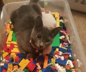 Koty są odporne na Lego