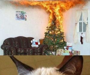 Zrzędliwy kot - świąteczny nastrój