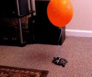 Jak nie zgubić żółwia
