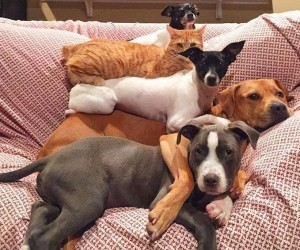 Zwierzęce zdjęcia rodzinne