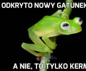 Odkryto nowy gatunek żaby