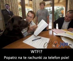 Musimy pogadać psie!