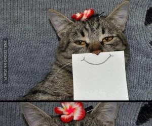 Koty z papierowym uśmiechem