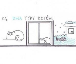Istnieją dwa typy kotów