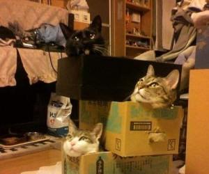 Koci wieżowiec