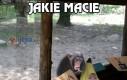 Bezcenne spojrzenie małpy