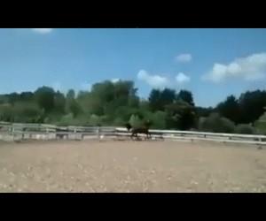 Sprytna ucieczka konia