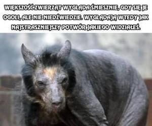 Niedźwiedzie nie są milutkie