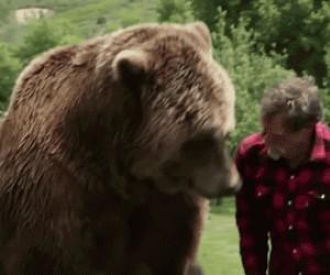 Jak niedźwiedzie okazują miłość