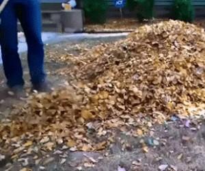 Jak ja, ku*wa, kocham liście!