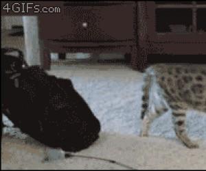 Mam Cię! Gonisz!