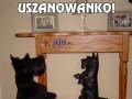 Uszanowanko!