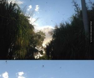 Niebo w Australii
