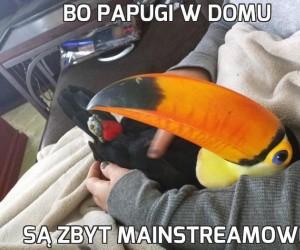 Bo papugi w domu