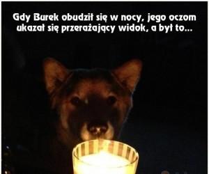 Straszna psia opowieść
