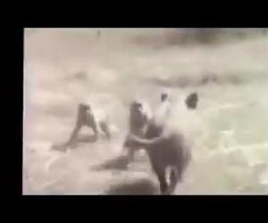 Afrykański pościg