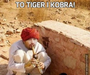 To Tiger i Kobra!