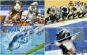 Świnki morskie na olimpiadzie