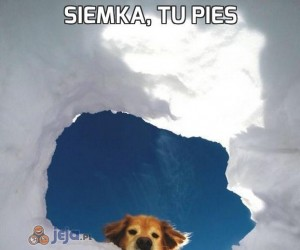 Siemka, tu pies