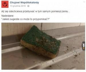Studencki chlew