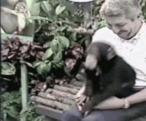 Zabawy z małpą...