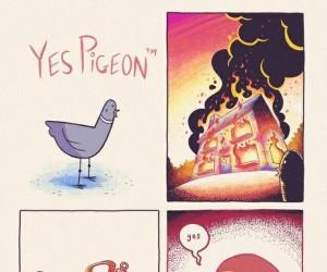 Przygody gołębia