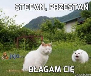 Stefan, przestań