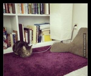 Koty muszą być ładowane co 8-12 godzin