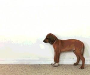 Od szczeniaczka do dorosłego psiaka