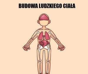 Quentin zna się na anatomii