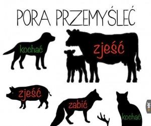 A Ty jaki masz stosunek do zwierząt?