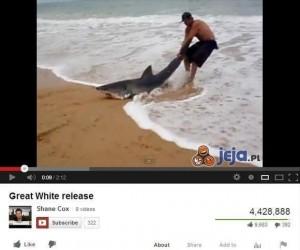 Zagrożony gatunek rekina