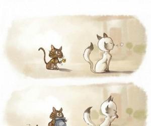 Zaloty kota