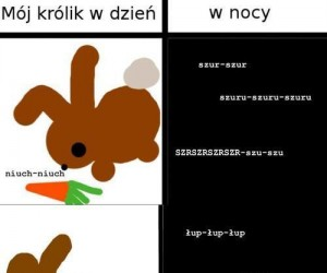 Mój królik w dzień i w nocy...