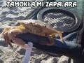Krab palacz