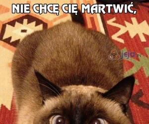 Mały, niewinny koteczek