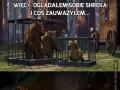 Więc... Oglądałem sobie Shreka i coś zauważyłem...