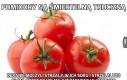 Pomidory są śmiertelną trucizną