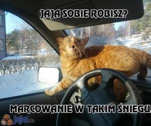 Nawet koty nie chcą takiej wiosny