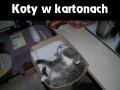 Koty w kartonach
