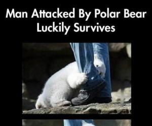 Człowiek zaatakowany przez niedźwiedzia polarnego