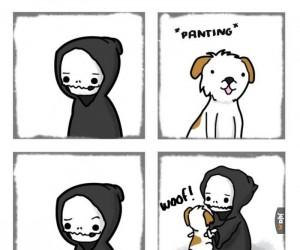 Śmierć woli... psy?