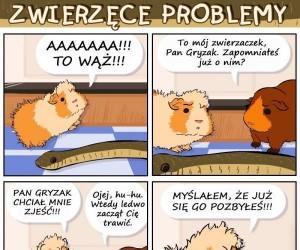 Zwierzęce problemy