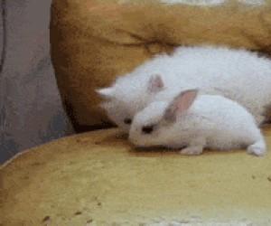 Uwielbiam całować króliczki