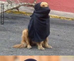 Muzułmański psiak