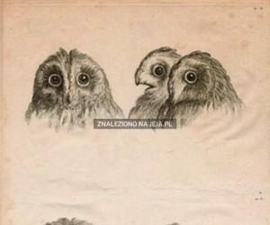 Gdybyśmy ewoluowali od innych zwierząt
